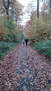 rsv-walking